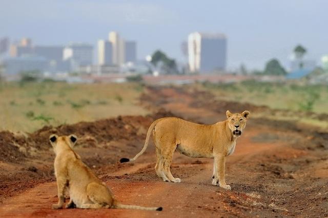 Kenya Nairobi1.jpg