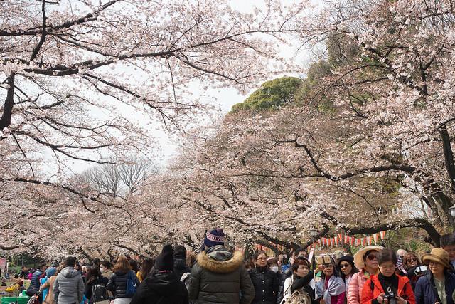 上野_桜.jpg