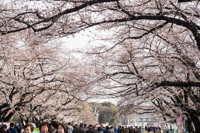 上野_桜1.jpg