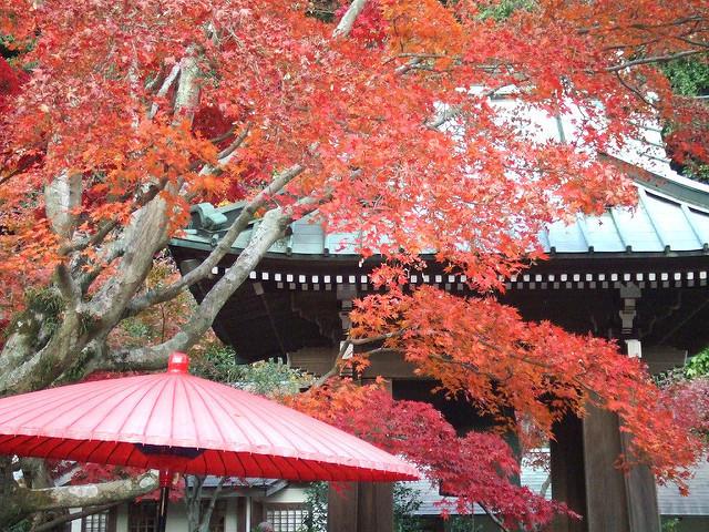 鎌倉紅葉.jpg